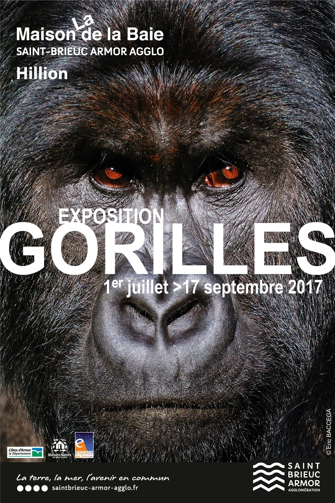 22 Hillion - Gorilles