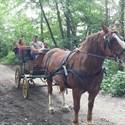 Activités d'été au centre équestre