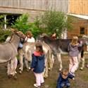 Découverte de l'âne et de la ferme