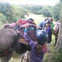 Mini-camp itinérant avec des ânes