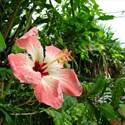 Ouvertures des serres tropicales