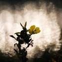 Photographies de la flore littorale