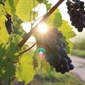 Wine Tour dans le vignoble de l'Aubance