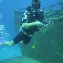 Baptêmes de plongée sous-marine