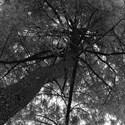 Des saisons et des arbres