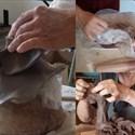 Stages création en terre, sculpture, modelage