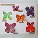 """Mes vacances au musée : """"un papillon, ça trompe énormément"""""""