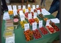 Collection de tomates de la Shaner