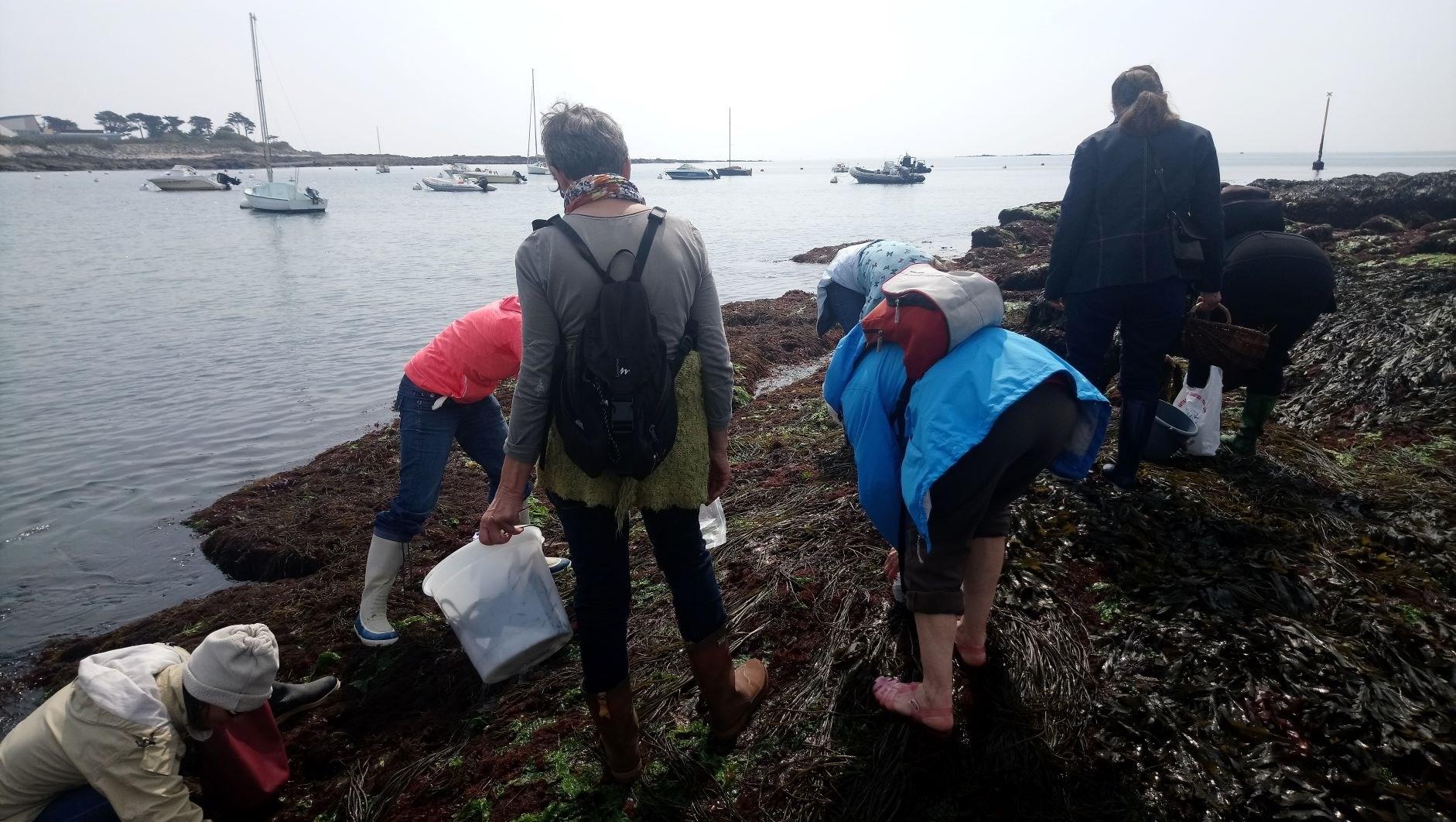 Image Découverte des algues de nos côtes